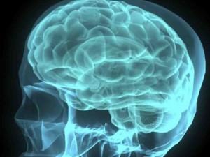 449926-brain-1349935920-935-640x480